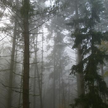 Brouillard aux Enfournats