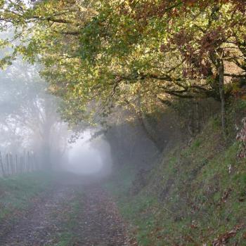 Brouillard sur le GR