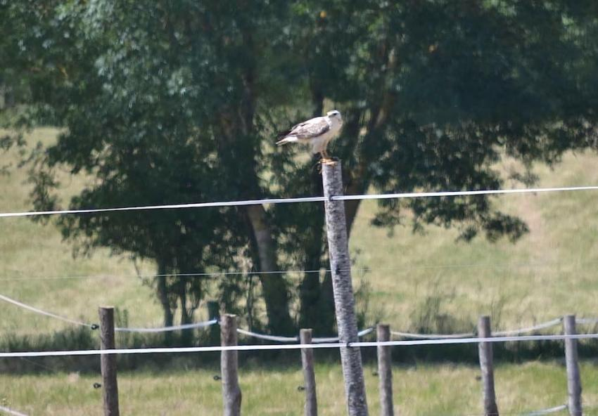 Buse variable blanche