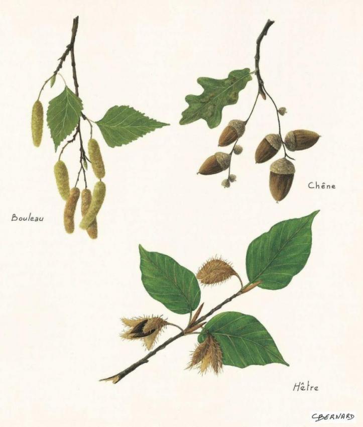 Fruits des arbres 2