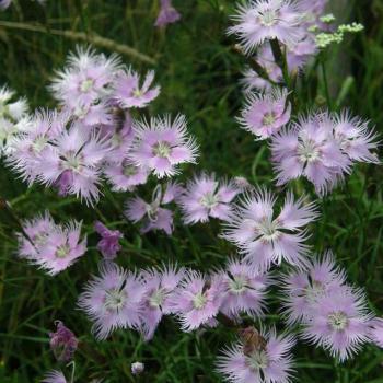 Photos flore