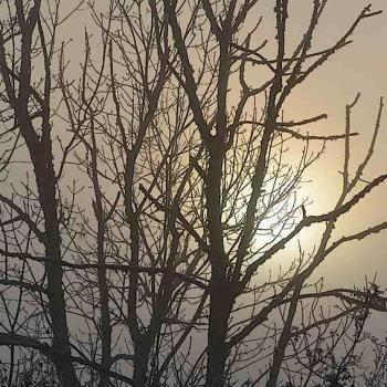 Soleil levant un matin de brouillard